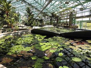 水生植物公園みずの森の温室.jpg