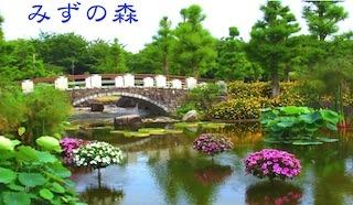 水生植物公園みずの森は美しい花と景色に出会える癒しスポット.jpg