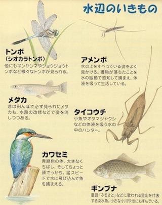水辺のビオトープで観察できる生物.jpg