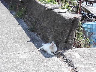 沖島の猫いない.JPG