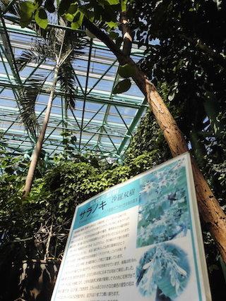 沙羅双樹.jpg