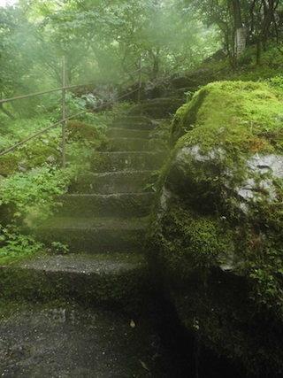 河内風穴の森の中の苔石段.jpg