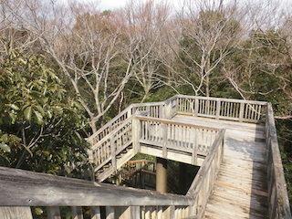 河辺いきものの森の落葉広葉樹.jpg