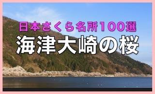 海津大崎の桜は日本さくら名所100選.jpg