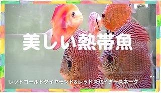 熱帯魚.jpg