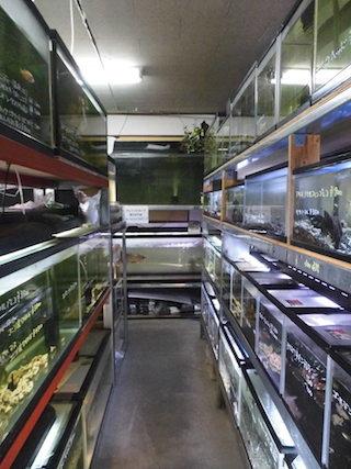 熱帯魚店.jpg
