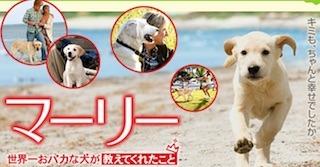 犬が活躍する映画.jpg