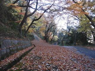猪子山の紅葉.JPG