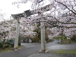 猪子山の繖山上山天満天神社の鳥居.jpg