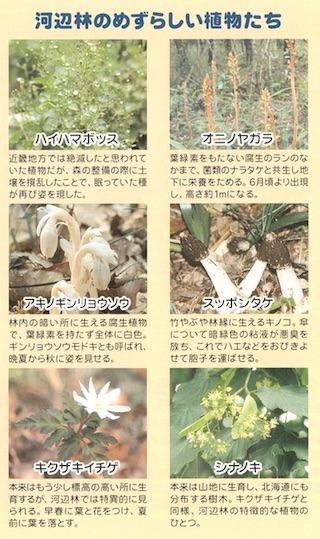珍しい植物図鑑.jpg