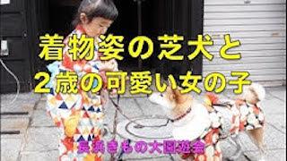 着物姿の芝犬と2歳の可愛い女の子.jpg