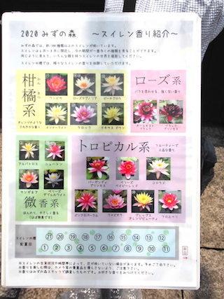 睡蓮の香り.jpg