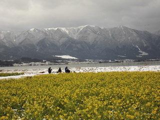 第1なぎさ公園の菜の花畑は滋賀の絶景スポット.jpg