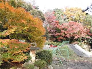 紅葉の美しい児童公園.jpg
