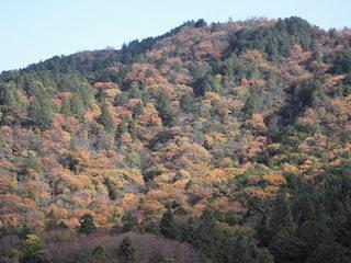 繖山(きぬがさやま)の紅葉景色.jpg