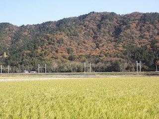 能登川の田園風景と紅葉名所.jpg