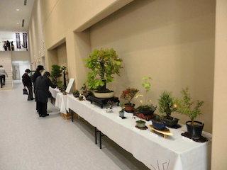 能登川盆栽同好会の盆栽
