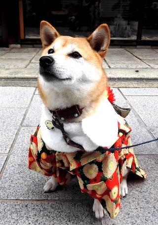 芝犬.jpg
