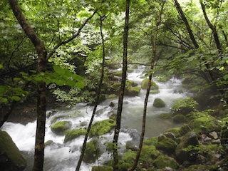 芹川の上流の景色.jpg