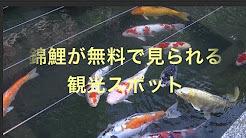 錦鯉.jpg