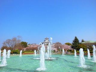 長浜城と豊公園の桜.jpg