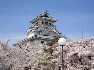 長浜城のある豊公園の桜.jpg