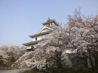 長浜城の桜.jpg