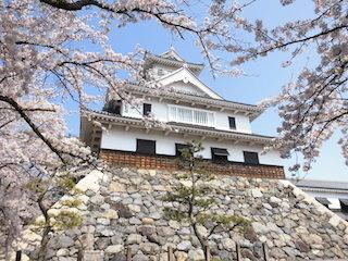 長浜城の桜(日本さくら名所100選).jpg