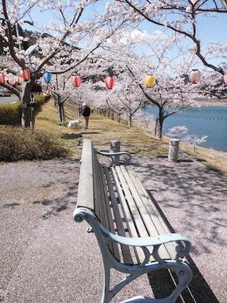 青土ダムと関西の桜の名所.jpg
