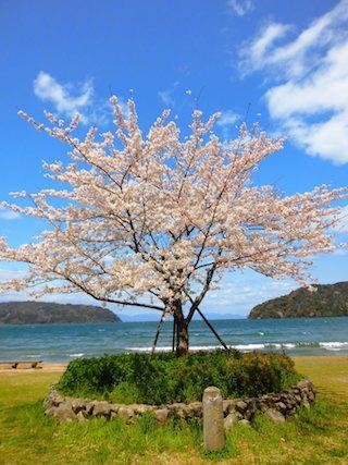 青空と桜と琵琶湖.jpg