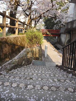 風情のある清水川散策路の桜.jpg