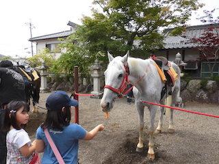 馬が人参を食べる.jpg