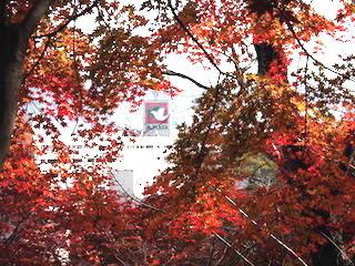 鳩のマークの平和堂アピア.jpg
